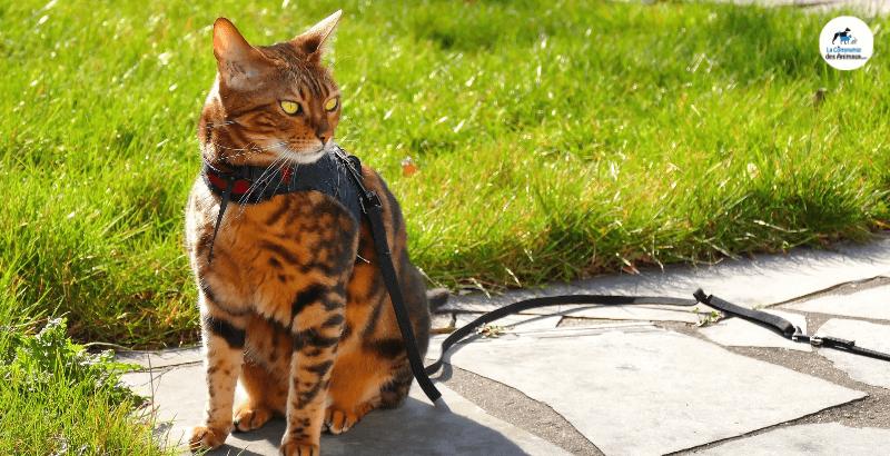 Comment choisir un harnais pour chat ?
