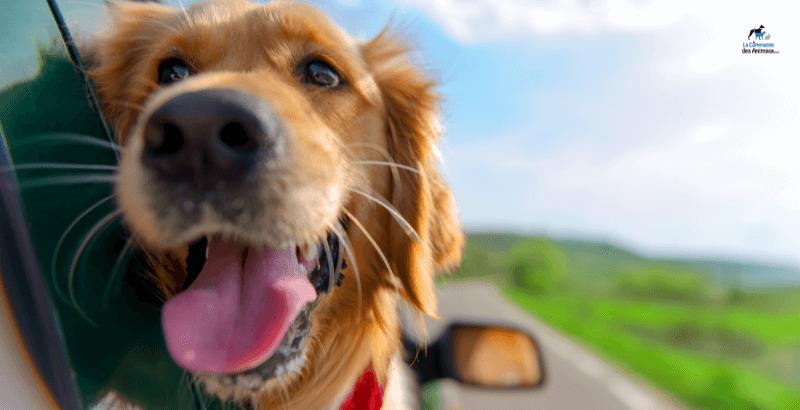 Partir en weekend avec ou sans son chien ?