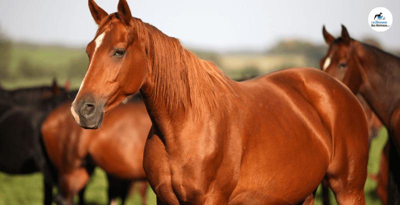 Comment prendre soin de la robe de mon cheval ?