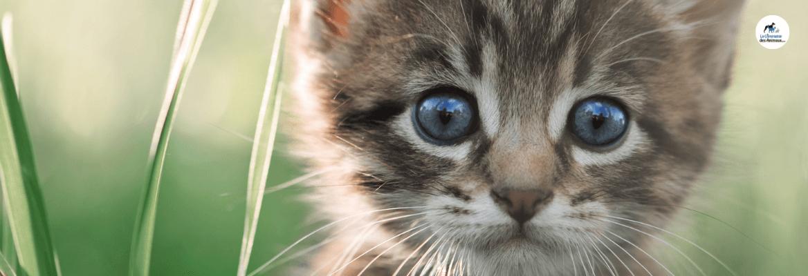 Quelle alimentation puis-je donner à mon chaton ?
