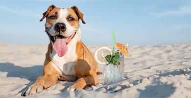 Canicule et fortes chaleurs : Quelles précautions prendre pour votre chien ?