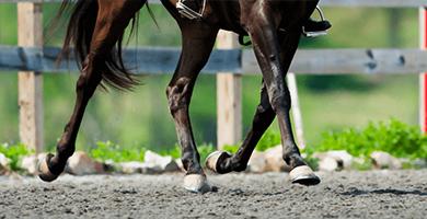 Comment soigner les pathologies du boulet chez le cheval ?