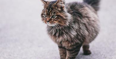 Dans quel cas faut-il tondre un chat ?