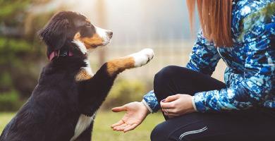 L'éducation positive du chien, c'est quoi ?