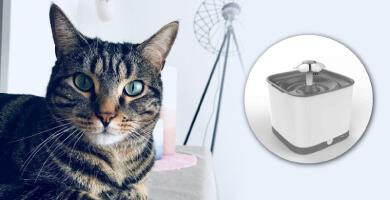 On a testé : La Eyenimal Smart Bloom Pet Fountain