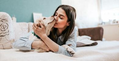 Pourquoi faut-il masser son chien ?