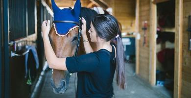Prendre soin des oreilles du cheval