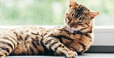 Savorial : Comment optimiser le transit digestif des chats ?