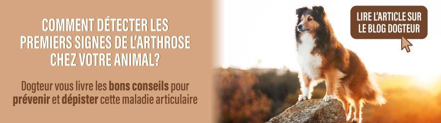 Article blog : les signes de l'arthrose chez votre animal