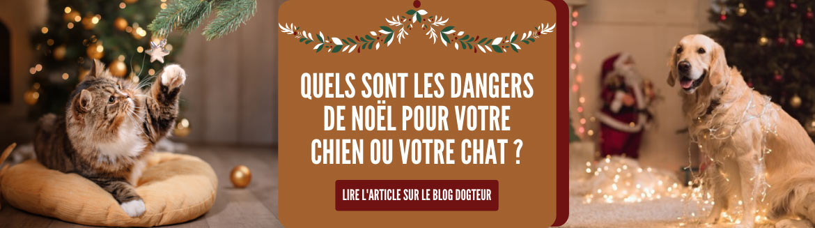 Billet de blog : les dangers de Noël