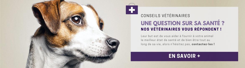 Profitez de nos conseils vétérinaires gratuits