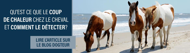 Article blog : le coup de chaleur chez le cheval