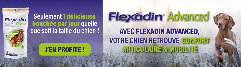 Flexadin Advanced : pour les articulations de votre chien