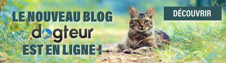 Nouveau Blog Dogteur