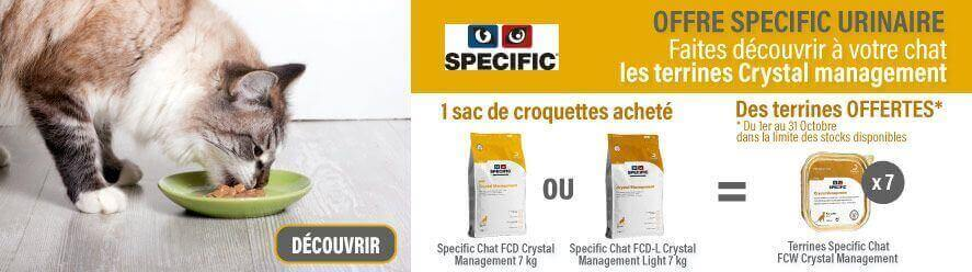 Offres specific chat Octobre