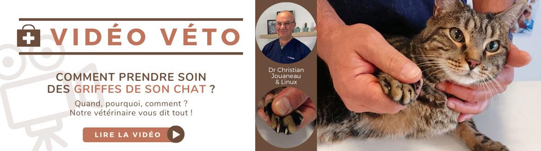 Vidéo vétérinaire : Comment couper les griffes de son chat ?