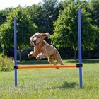 Trixie Obstacle Agility
