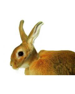 Carcan de protection pour lapins