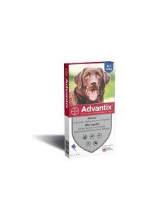 Advantix grand chien (25 - 40 kg) - 6 pipettes- La Compagnie des Animaux