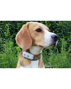 Collier GPS Weenect Dogs 2