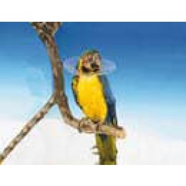 Carcan de protection pour oiseaux - 14 cm - Dogteur