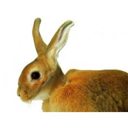 Carcan de protection pour lapins - Dogteur