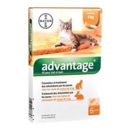 Advantage 40 chat et lapin de 1 à 4 kg - 6 pipettes - Dogteur