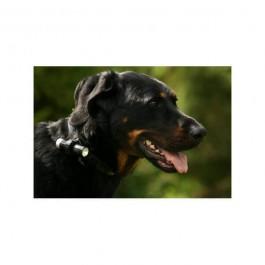 Eyenimal Dog Videocam - Dogteur