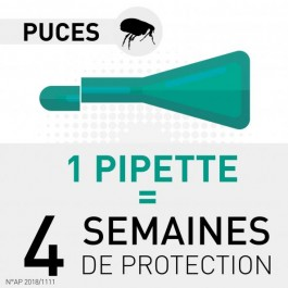 Frontline Combo Chat 6 pipettes - Dogteur