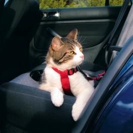 Harnais de sécurité voiture pour chat - Dogteur