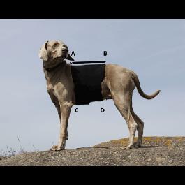 Protection lombaire pour chien Back On Track noire M - 54 x 48 x L22 cm - Dogteur