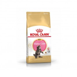 Royal Canin Maine Coon Chaton 4 kg - Dogteur