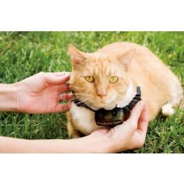 Pet Safe collier récepteur chat Cat Fence - Dogteur