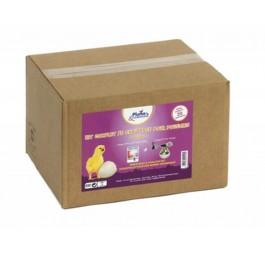 Plume & Compagnie Kit complet chauffage poussins - Dogteur
