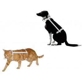 Carcan Propal Chiot, chaton et Yorkshire - T0 10-15 cm  - Dogteur