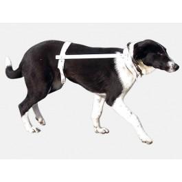 Carcan Propal Teckel, Scottish, Terrier, Basset - T3 26-32 cm  - Dogteur