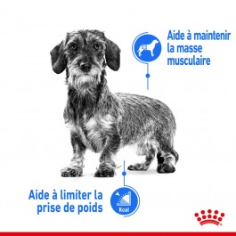 Royal Canin Mini Light Weight Care 8 kg - Dogteur