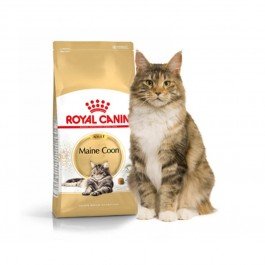 Royal Canin Maine Coon Adult 31 4 kg - Dogteur