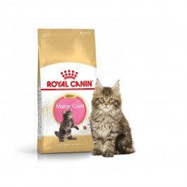 Royal Canin Maine Coon Chaton 2 kg - Dogteur