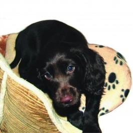 Chaufferette Snuggle Safe - Dogteur