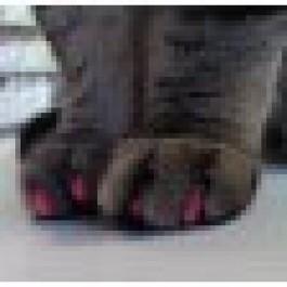 Soft Claws Medium Rose pour chat - Dogteur