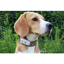 Collier GPS Weenect Dogs 2 - Dogteur