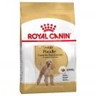 Royal Canin Caniche Adult - La Compagnie des Animaux