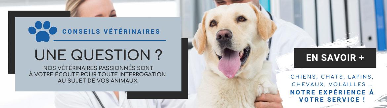 Profitez de nos conseils vétérinaire gratuits