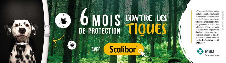 Protégez votre chien des parasites avec le collier Scalibor