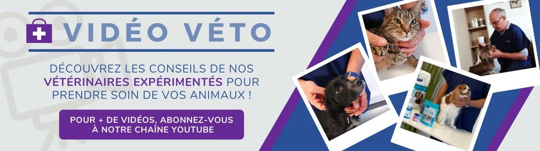 Découvrez nos conseils vétérinaires en vidéos