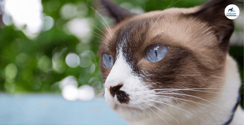 Comment prendre soin des yeux de son chat ?