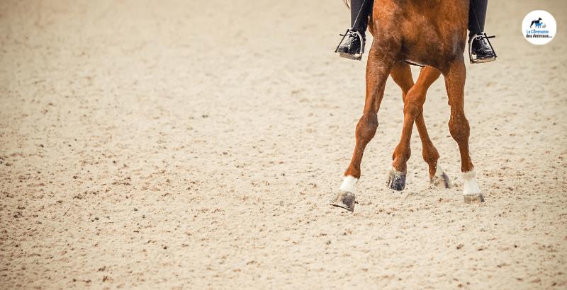 Comment prendre soin des pieds de son cheval ?