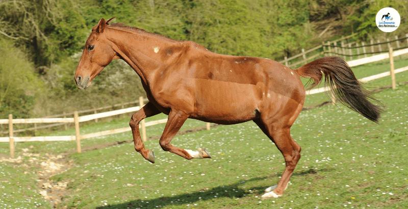 Articulations du cheval : comment bien complémenter ?
