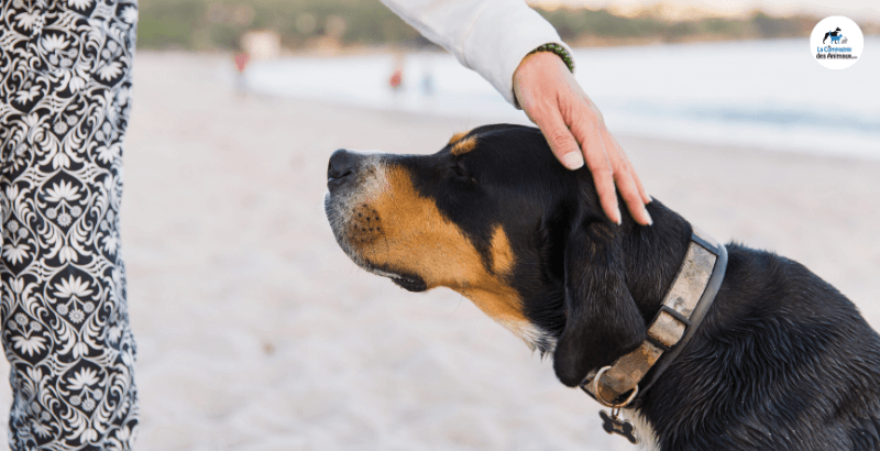 Comment apprendre le rappel à son chien ?